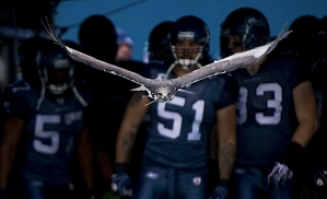 Taima the Hawk flies out of the tunnel moments before Lofa Tatupu and the rest of the Seahawks are introduced to a raucous crowd at Qwest Field.